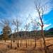 MacGregor Ranch - Fall Light