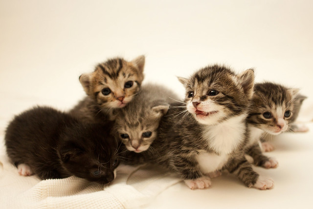 what is the average life expectancy of an indoor cat?