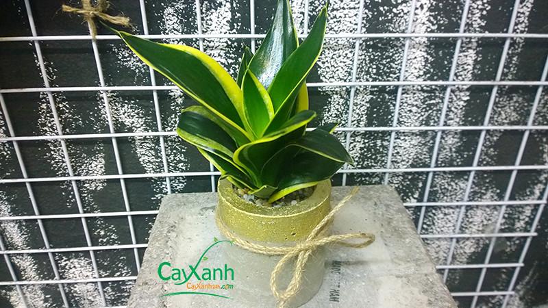 cayxanh24h.com | luoi ho thai