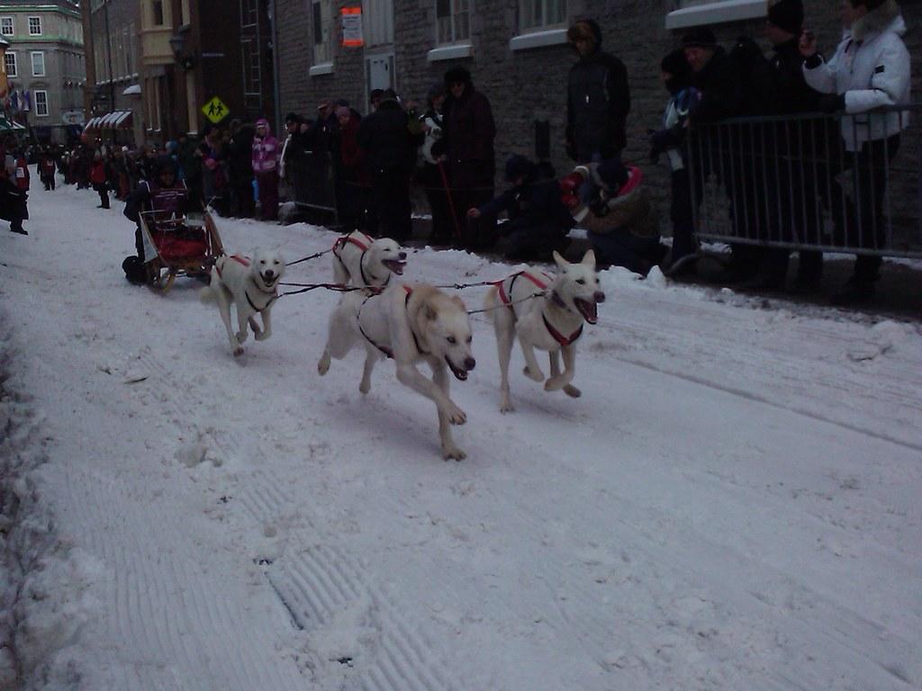 Woof It Up Dog Training Surrey Bc