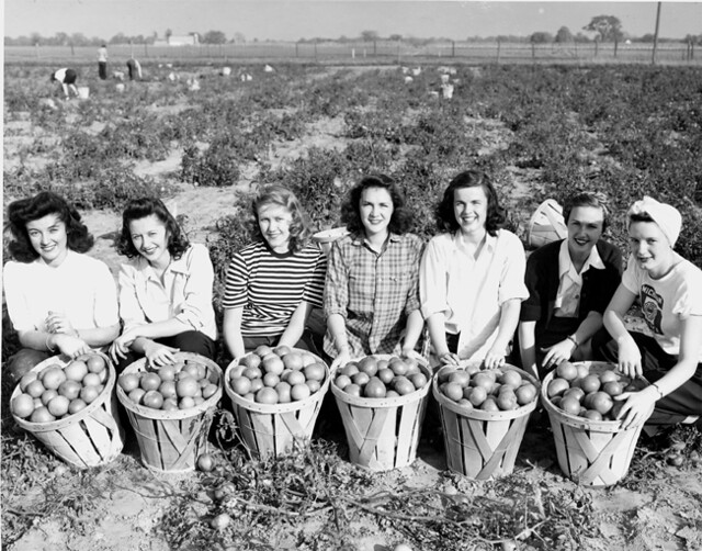 Women S Land Army At Victory Gardens 1940s The Women S