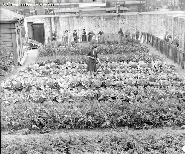 Allotment piccadilly gardens 1942 m75582 allotment being for Gardening jobs manchester