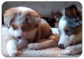 My Puppies | by Latina On a Mission