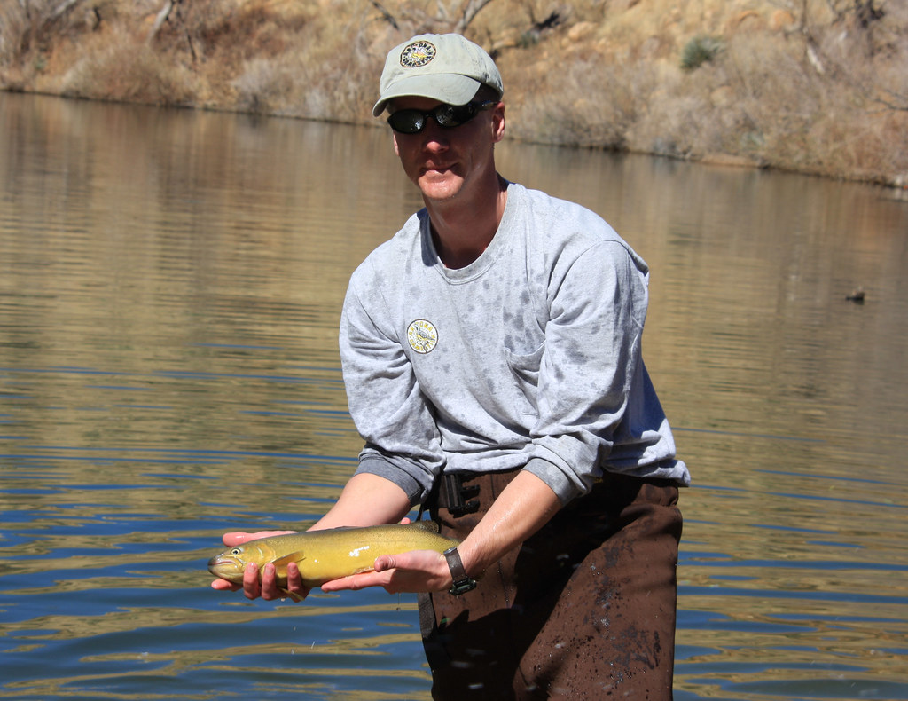 Releasing a gila trout arizona game and fish department for Arizona fish and game