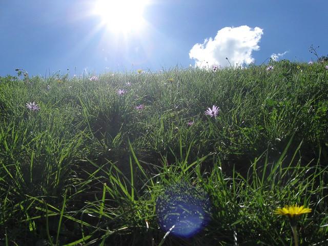 Cesped de los jardines boboli en los jardines boboli del for Jardines boboli