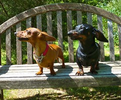 Daisy & Wolfgang catch the wind. by Collene Goldman