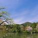 Spring Garden at Ryouan-ji
