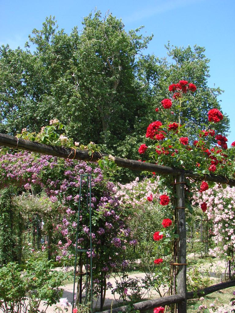 la roseraie de l 39 hay les roses la roseraie de l 39 hay les ro flickr. Black Bedroom Furniture Sets. Home Design Ideas