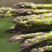 first asparagus