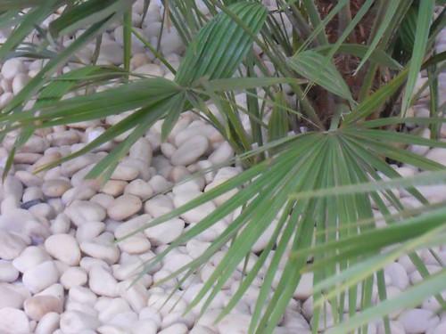 Piedra blanca decorativa jard n flickr photo sharing - Piedra decorativa jardin ...