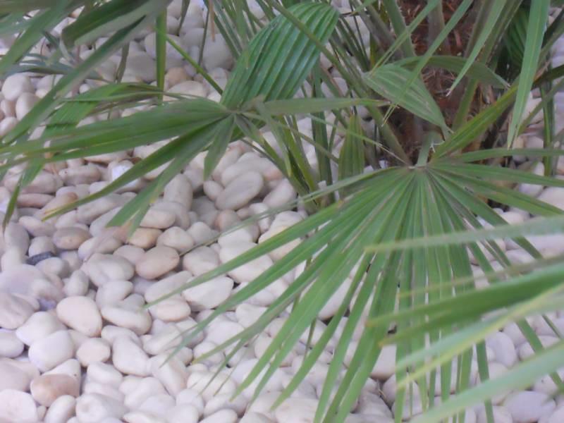 Piedra Blanca Decorativa Jardin