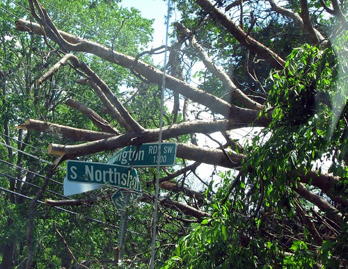 tree on signs | by cathymccaughan