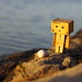 Danbo finds a shell