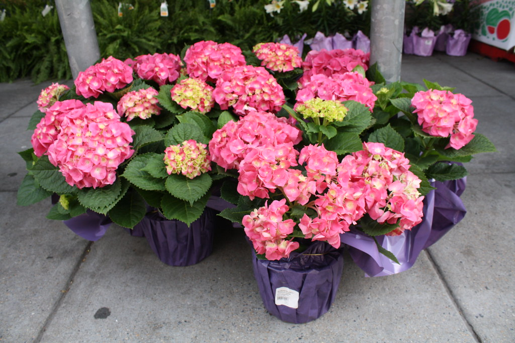 Whole Foods Flowers Nyc