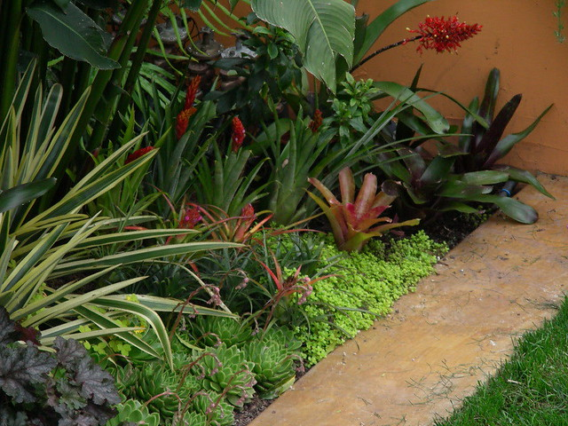 Bromeliads at Trejo Garden Flickr Photo Sharing