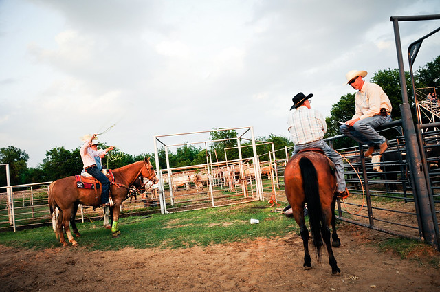 Rodeo Bullriders Pbr Texas Cowboys 9866 Johnson County