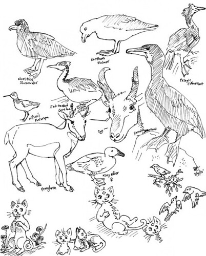 Mixed Animals Drawings Animals Mixed Together