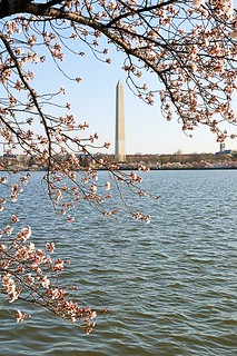 Cherry Blossoms at Tidal Basin | by ghbrett