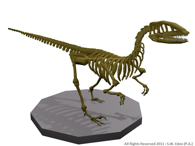 Utahraptor SkeletonUtahraptor Skeleton