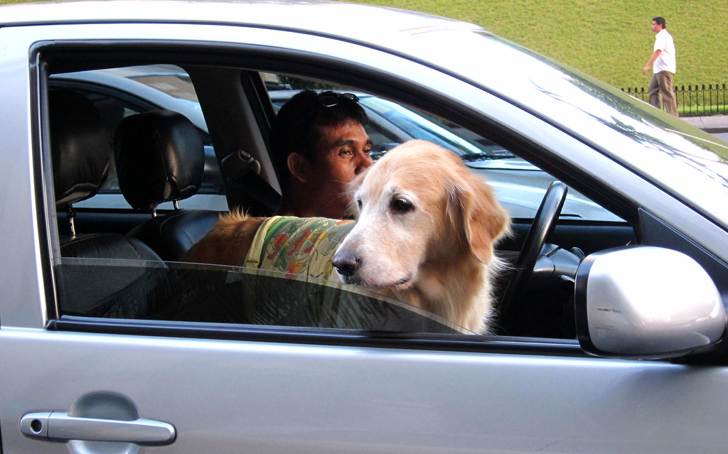 dog looking out of car window makati gem flickr