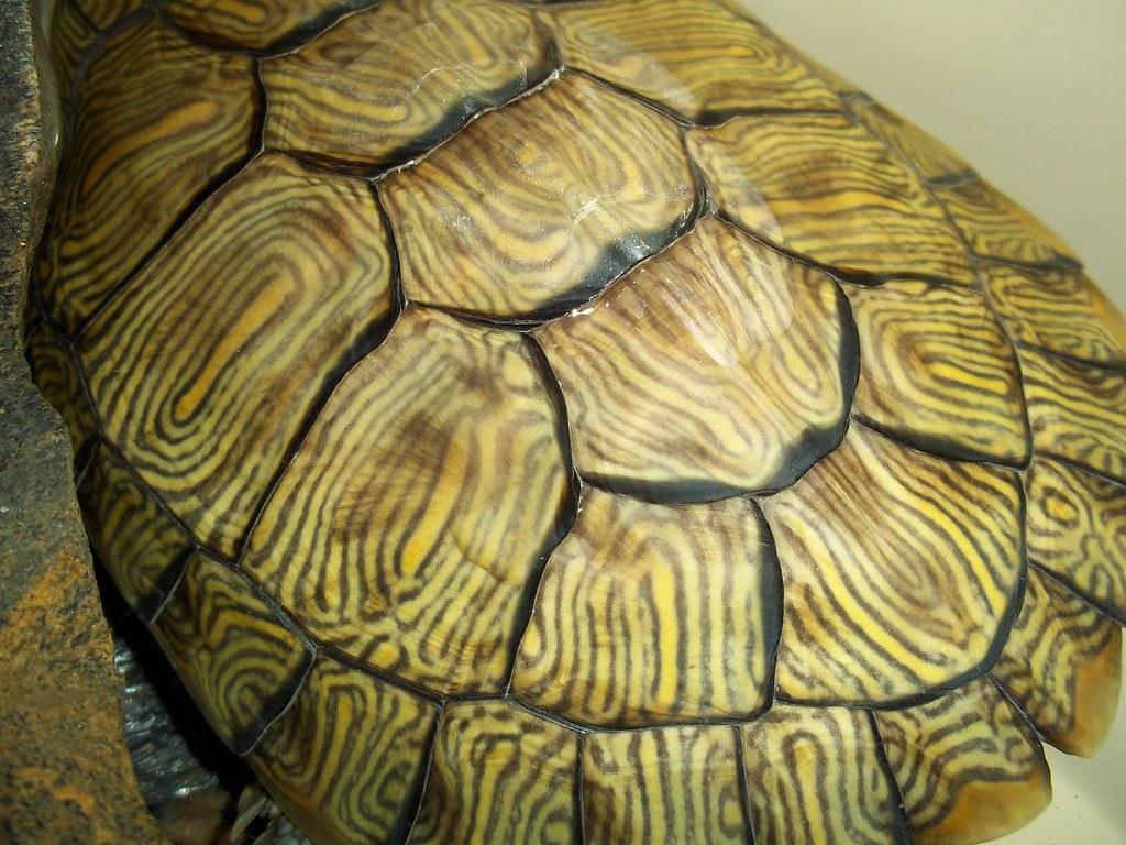 turtle shell pattern - HD1024×768