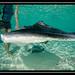 2012-4 Bahamas-5547.jpg