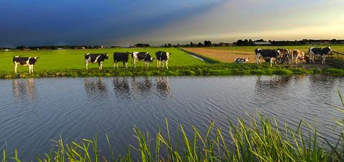IMG_6052 Holland