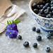 Blueberry - Lovin