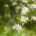 garland of white