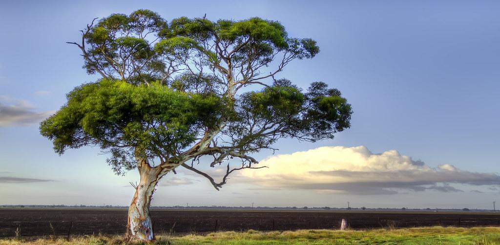 Gumtree australia sign in