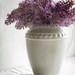 textured lilacs
