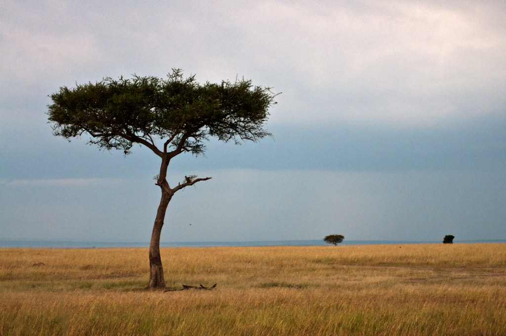 Beautiful evening view in the African savanna   Even views ...
