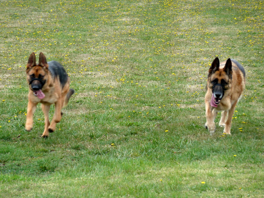 Cranbourne Dog Training Berkshire