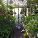 My intermediate greenhouse