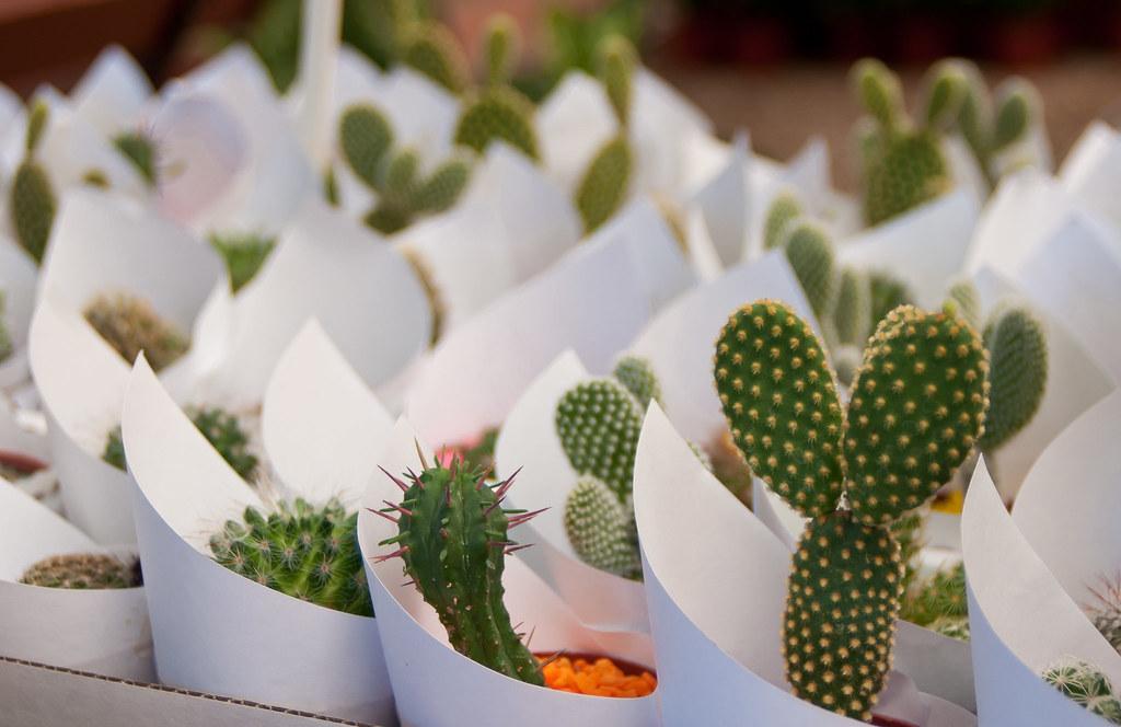 Los cactus de la se ora de abajo el nombre de esta foto p for Nombres de cactus