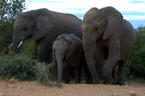 Elephant family group | by Bird Brian