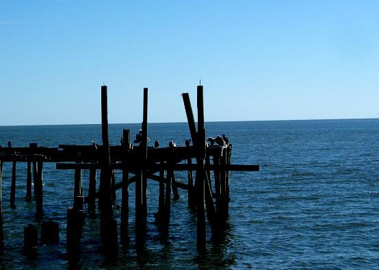 Pier piling water cedar key birds christopher sessums for Pier piling