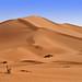 Desert Dunes- Explore