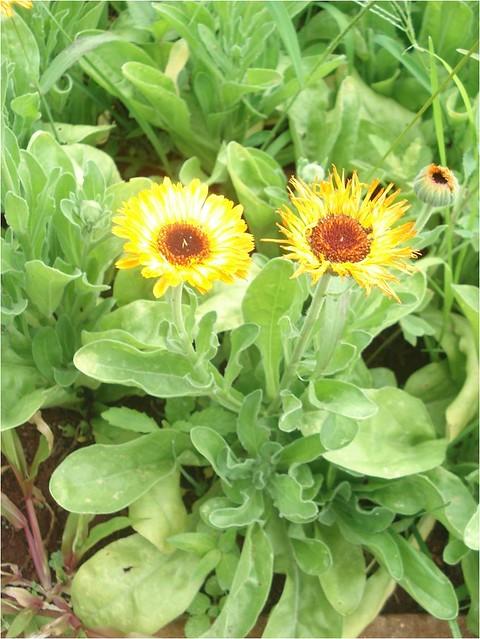Cole o plantas arom ticas e medicinais acesse www for Jardinera plantas aromaticas