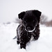 Black Puppy on White Snow