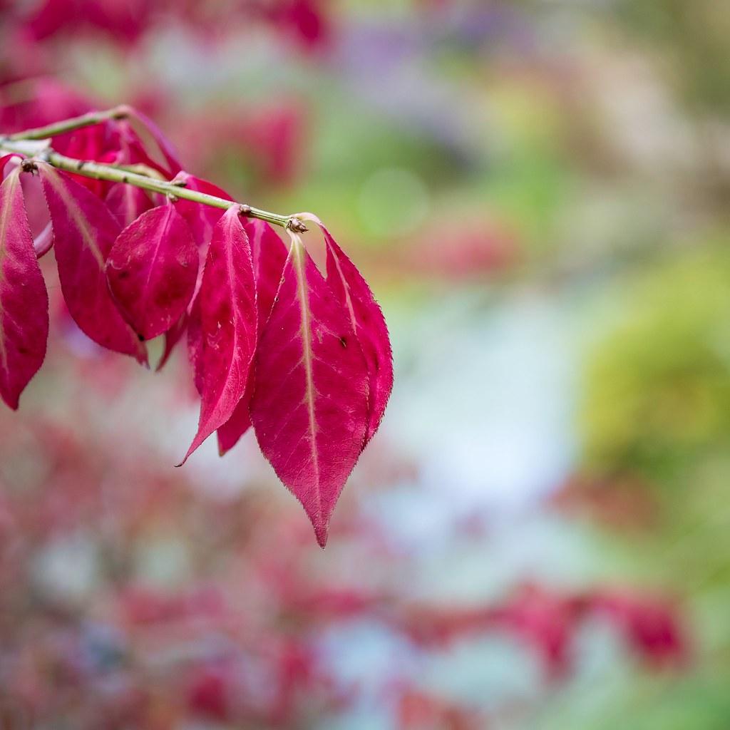 Loki Schmidt Garten: Herbstfarben / Autumn Colors