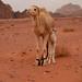 I am brand new in the desert...   2