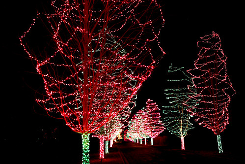 Lit Up Trees, Like Cotton Candy on a Stick | by Toria Clark