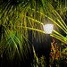 Lighted Fronds