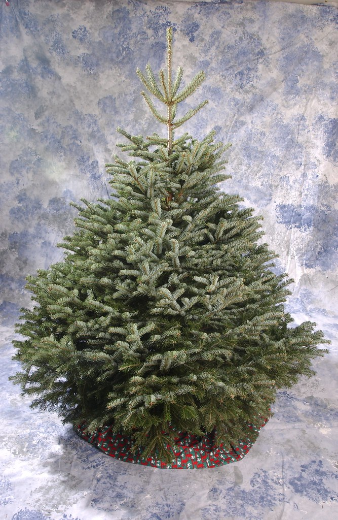 Christmas Tree For Free