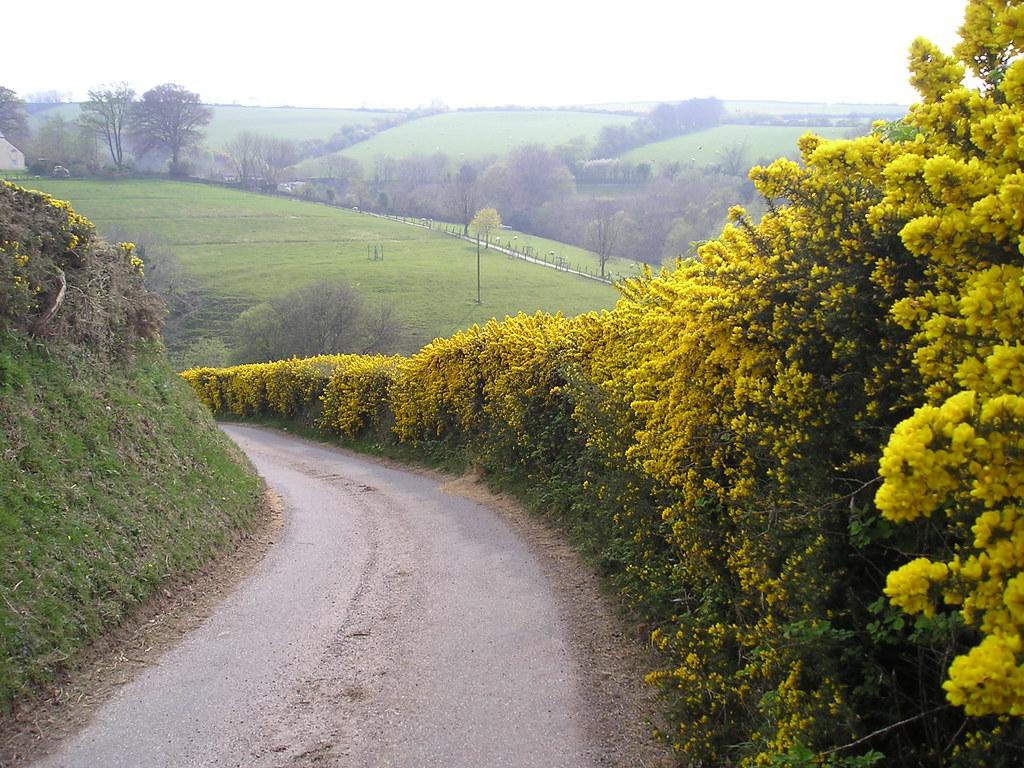 Exmoor: Gorse Hedging above Brendon | www ...