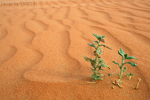 Alone in sand- Explore Front Page | by TARIQ-M