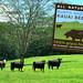 North Shore Kauai Beef Stickers