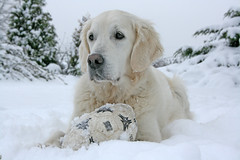 Snow snow snow! . . . . and Ditte loves it