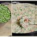 Creamed Peas and Corn